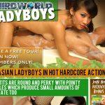Third World Ladyboys Usernames